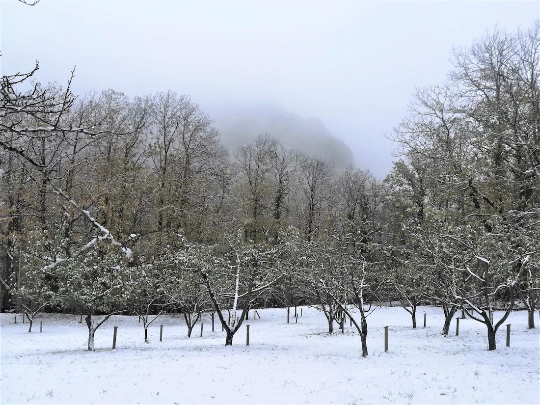 Nos arbres ont besoin du froid !