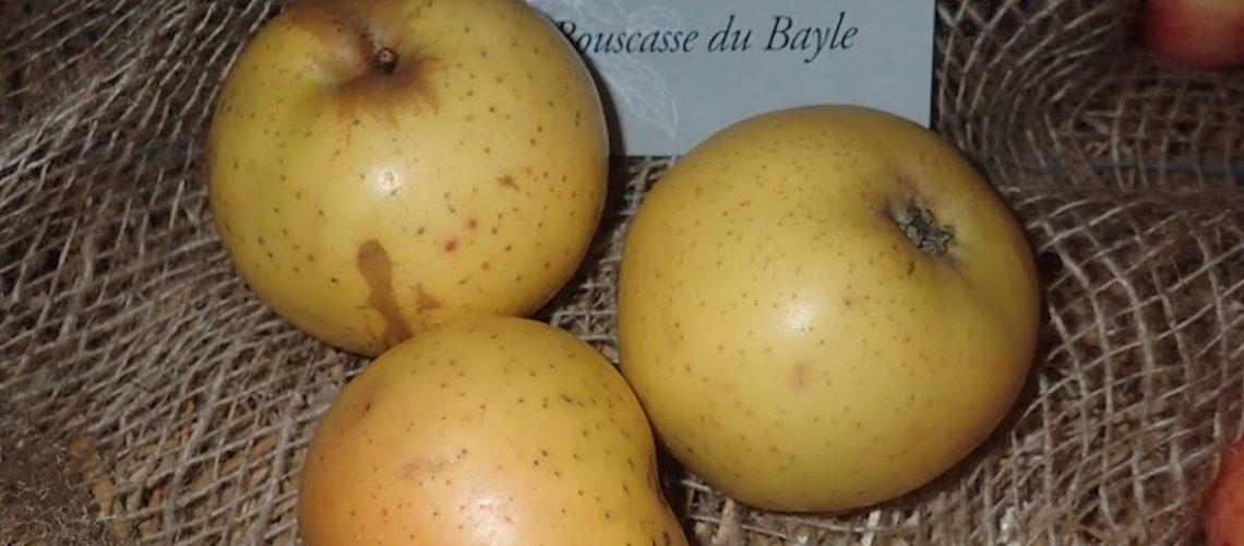 Bouscasse_de_Bayle_RKML